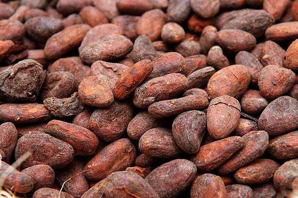 kakao-bobi446